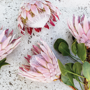 king protea placemat vinyl